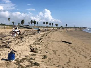 浜掃除.jpg